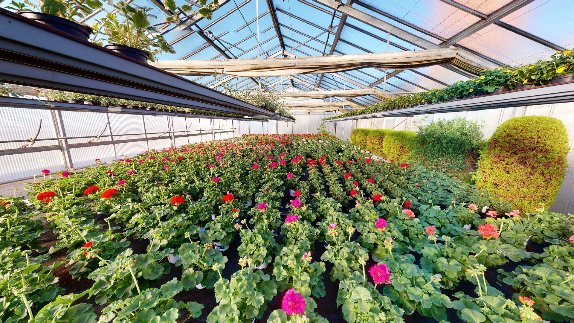 Saisonale Gewächse aller Art für Ihren Garten